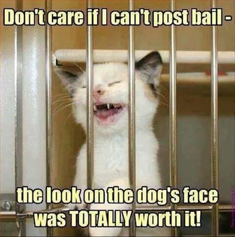 Dallas Bail Bonds - Funny Cat in Jail